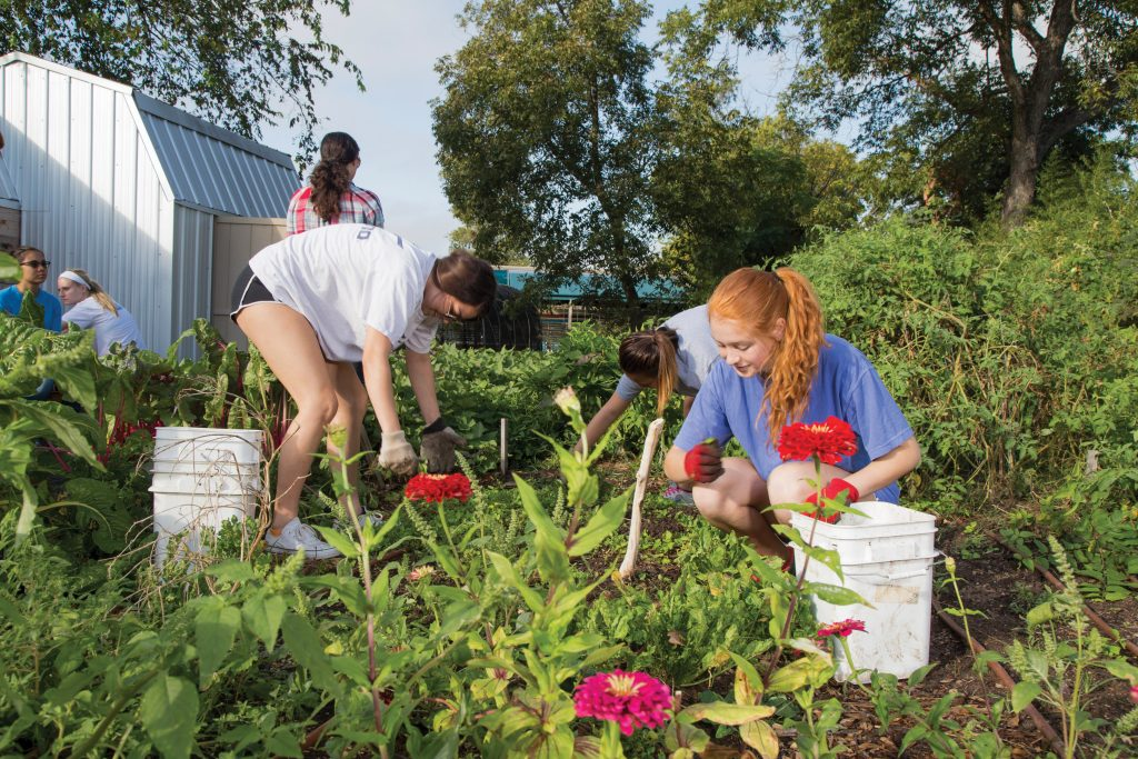 Several students kneeing and bending over in the community garden, harvesting vegetables. Brightly-colored flowers are in the foreground.