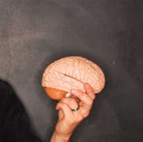 A hand holding a model of a human brain in front of a gray background