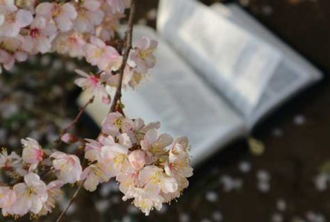Cherry blossom with book in background.