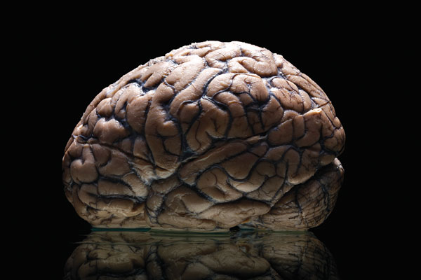 Brain on black table. Photo by Adam Voorhes.