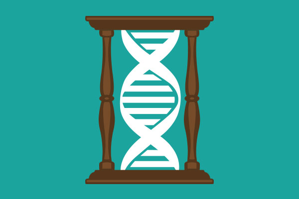Genetic influence on intelligence increases over time.