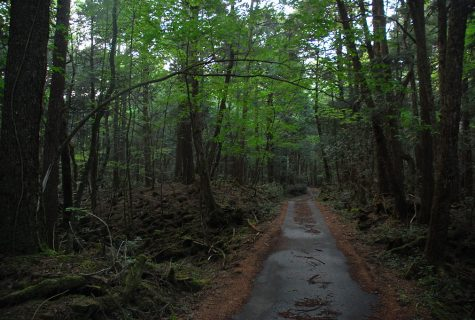 "Aokigahara forest is also known as the ""Sea of Trees."""