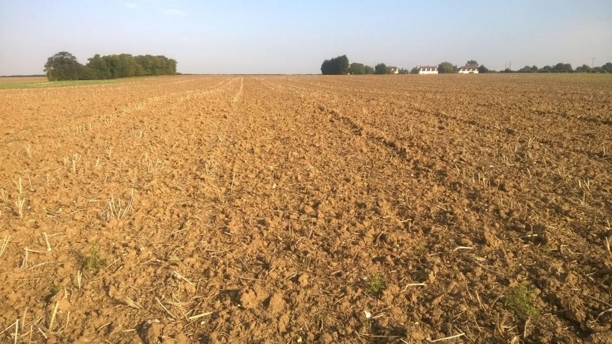 Plowed field.