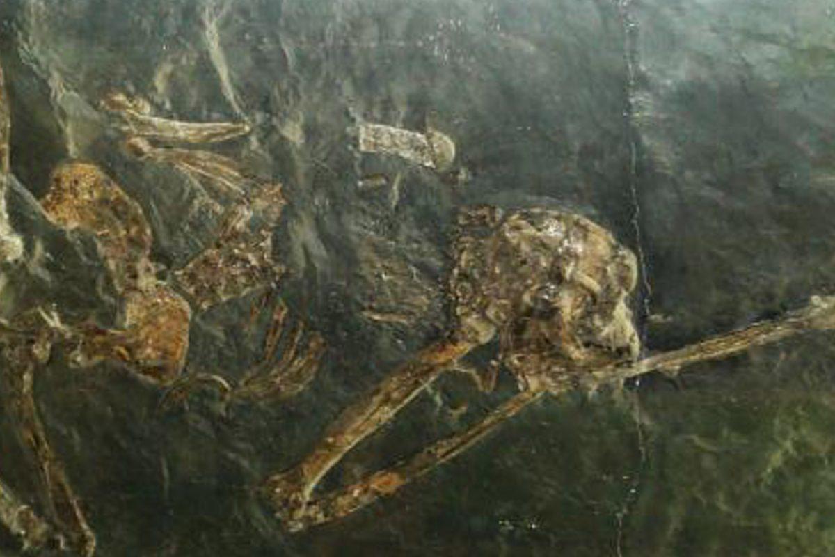 extinct ancient ape