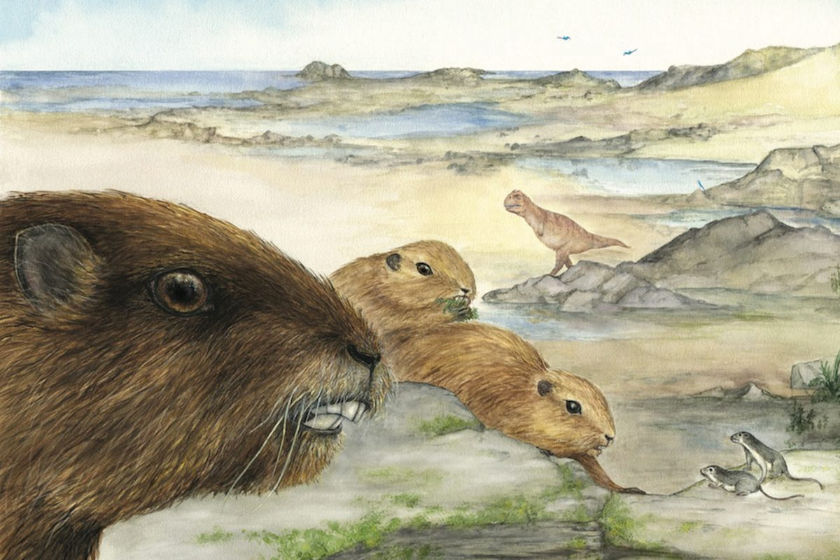 An artist's rendering of gopher-like mammals in a prehistoric setting.